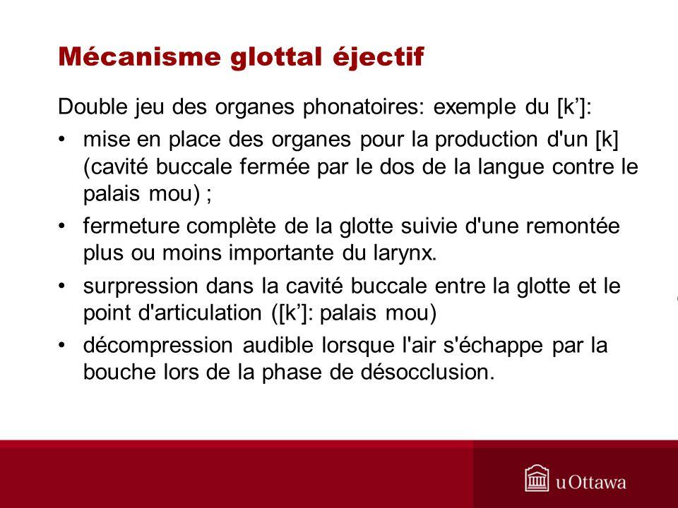 Double jeu des organes phonatoires: exemple du [k]: mise en place des organes pour la production d'un [k] (cavité buccale fermée par le dos de la lang