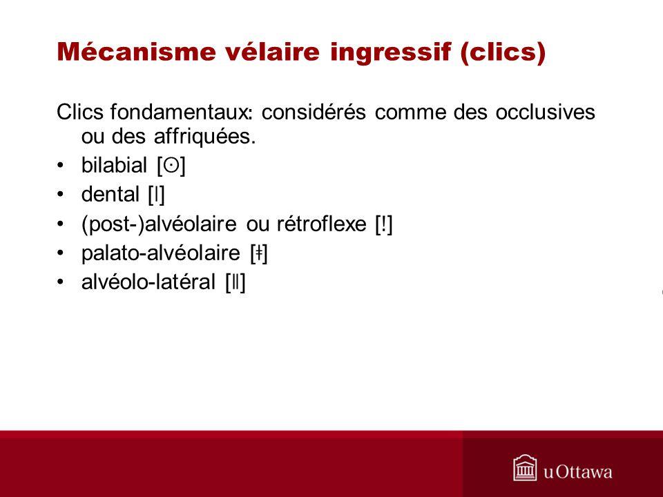 Mécanisme vélaire ingressif (clics) Clics fondamentaux : considérés comme des occlusives ou des affriquées. bilabial [ ʘ ] dental [ ǀ ] (post-)alvéola