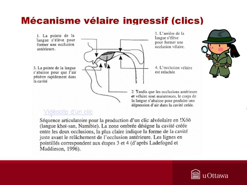 Mécanisme vélaire ingressif (clics) Vidéoclip dun clic