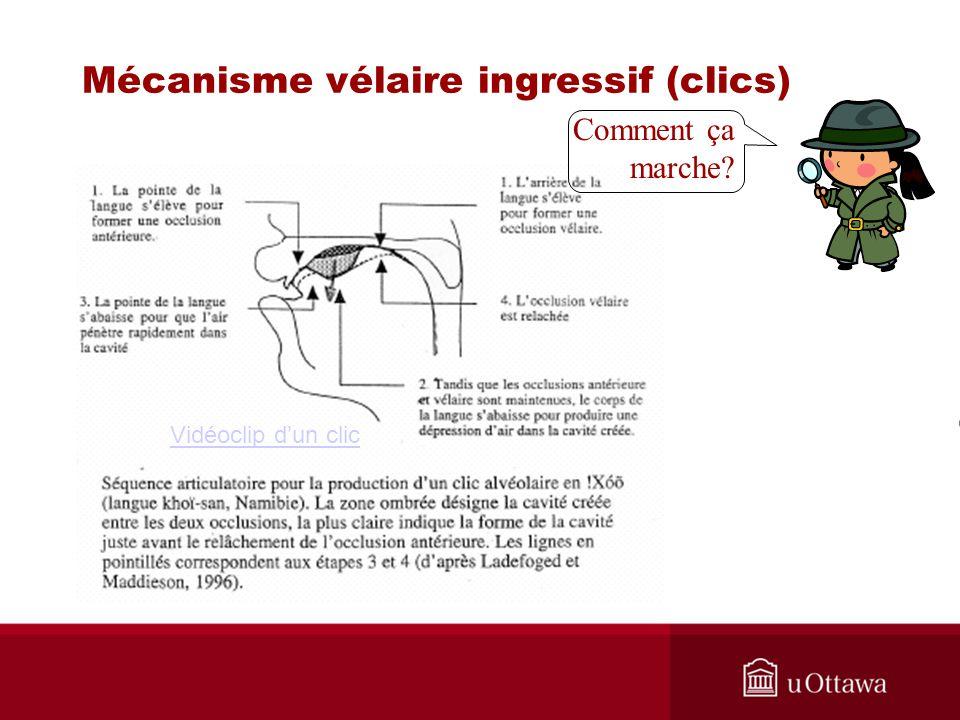 Mécanisme vélaire ingressif (clics) Vidéoclip dun clic Comment ça marche?
