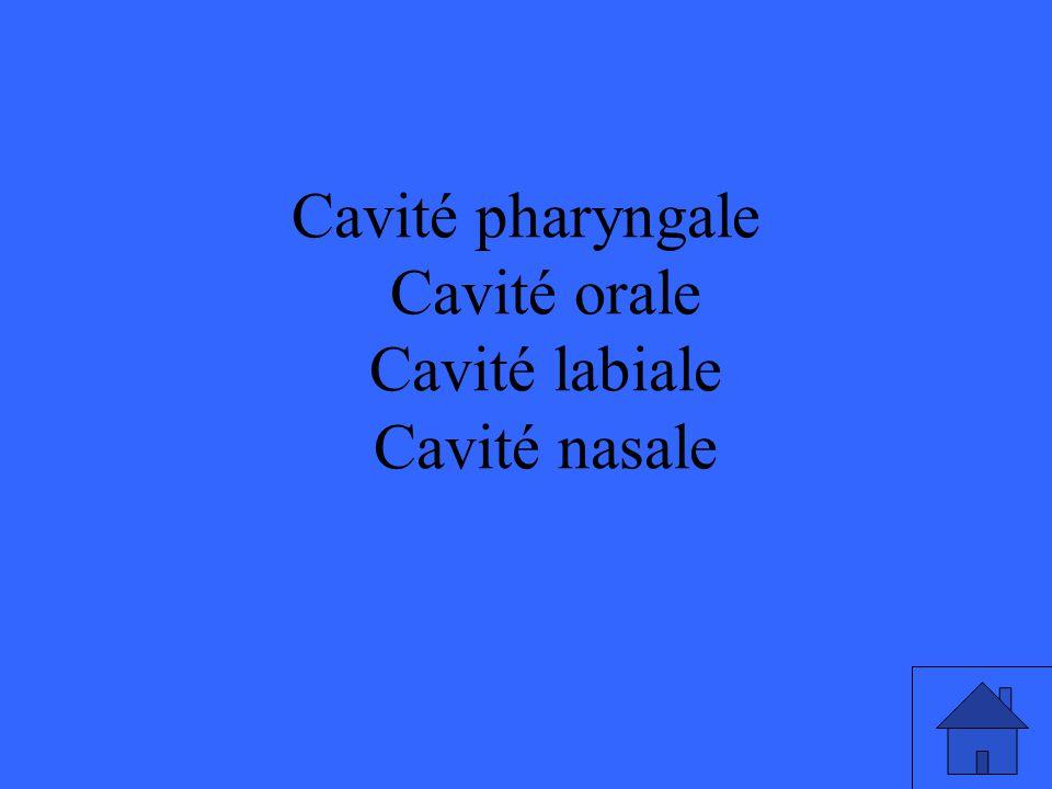 Cavité pharyngale Cavité orale Cavité labiale Cavité nasale