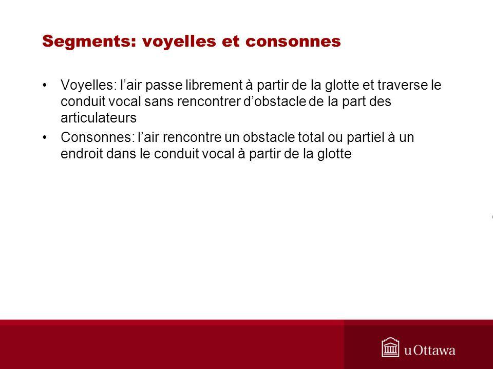 Segments: voyelles et consonnes Voyelles: lair passe librement à partir de la glotte et traverse le conduit vocal sans rencontrer dobstacle de la part
