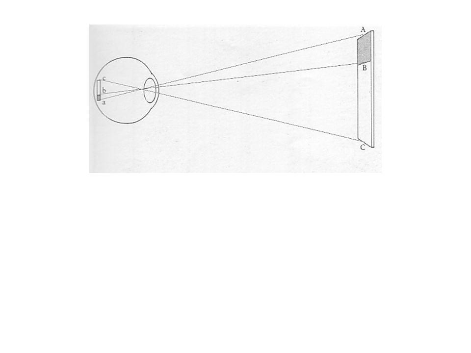 1-Optique géométrique Effet de perspective: plus lobjet séloigne du plan fronto- parallèle plus sa forme sur la rétine sera distordue; En dépit de toutes ces distorsions de limage rétinienne, la constance perceptive demeure, lobjet demeure le même.