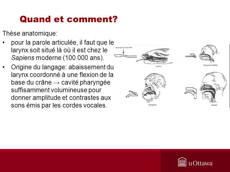 Thèse anatomique: pour la parole articulée, il faut que le larynx soit situé là où il est chez le Sapiens moderne (100 000 ans).
