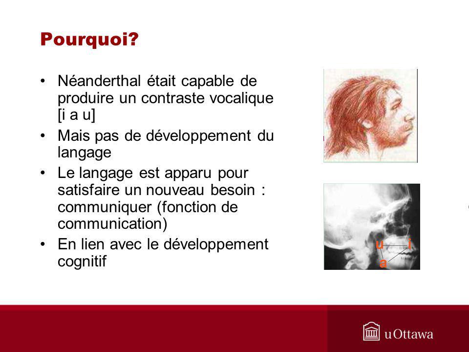 Néanderthal était capable de produire un contraste vocalique [i a u] Mais pas de développement du langage Le langage est apparu pour satisfaire un nouveau besoin : communiquer (fonction de communication) En lien avec le développement cognitif Pourquoi?