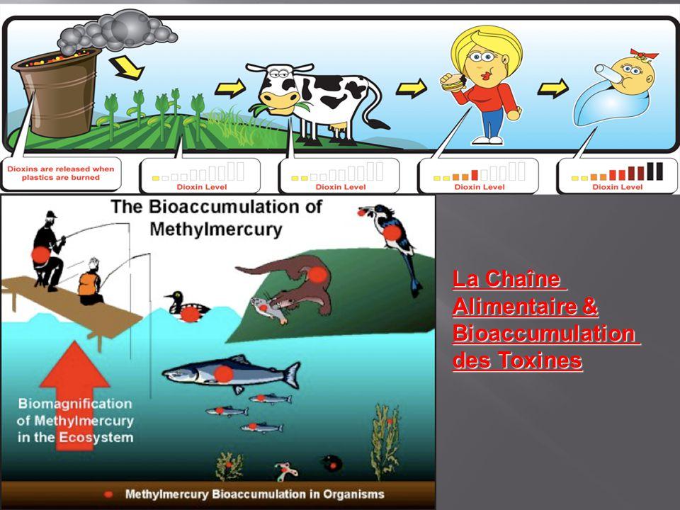 La Chaîne Alimentaire & Bioaccumulation des Toxines