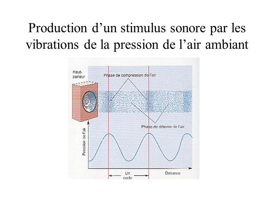 Production dun stimulus sonore par les vibrations de la pression de lair ambiant