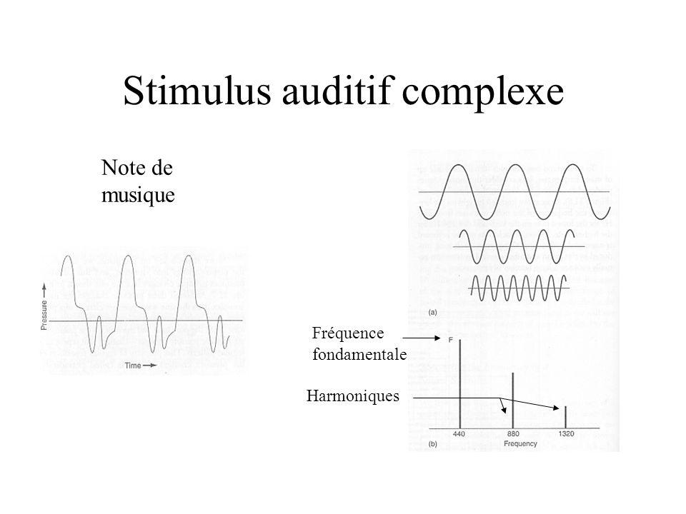 Stimulus auditif complexe Note de musique Fréquence fondamentale Harmoniques