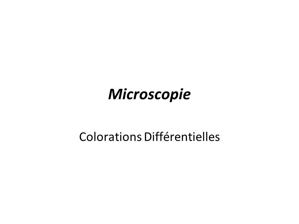 Microscopie Colorations Différentielles