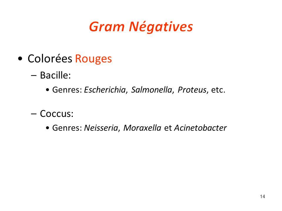 Colorées Rouges –Bacille: Genres: Escherichia, Salmonella, Proteus, etc.
