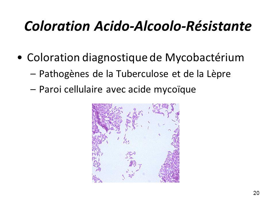 Coloration Acido-Alcoolo-Résistante Coloration diagnostique de Mycobactérium –Pathogènes de la Tuberculose et de la Lèpre –Paroi cellulaire avec acide mycoïque 20
