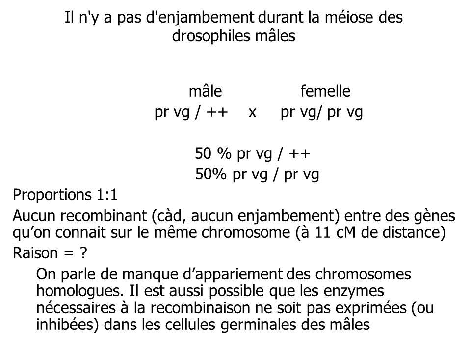 mâle femelle pr vg / ++ x pr vg/ pr vg 50 % pr vg / ++ 50% pr vg / pr vg Proportions 1:1 Aucun recombinant (càd, aucun enjambement) entre des gènes qu