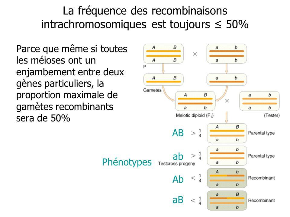 La fréquence des recombinaisons intrachromosomiques est toujours 50% Parce que même si toutes les méioses ont un enjambement entre deux gènes particul