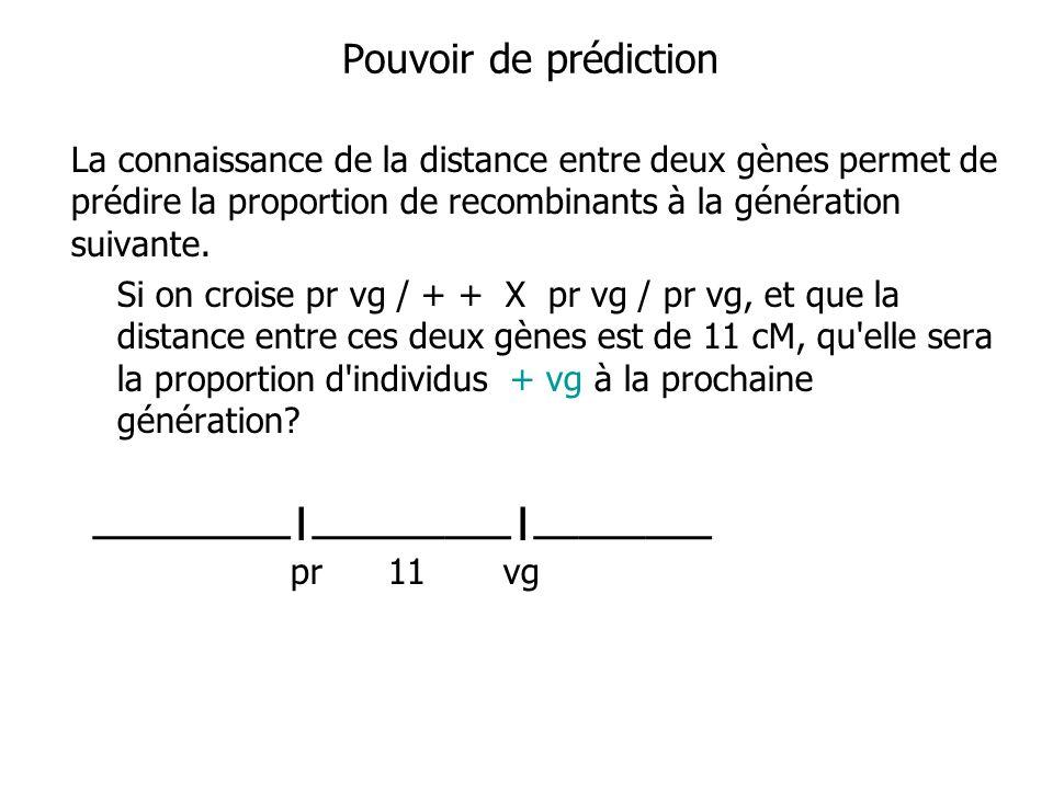 Pouvoir de prédiction La connaissance de la distance entre deux gènes permet de prédire la proportion de recombinants à la génération suivante. Si on