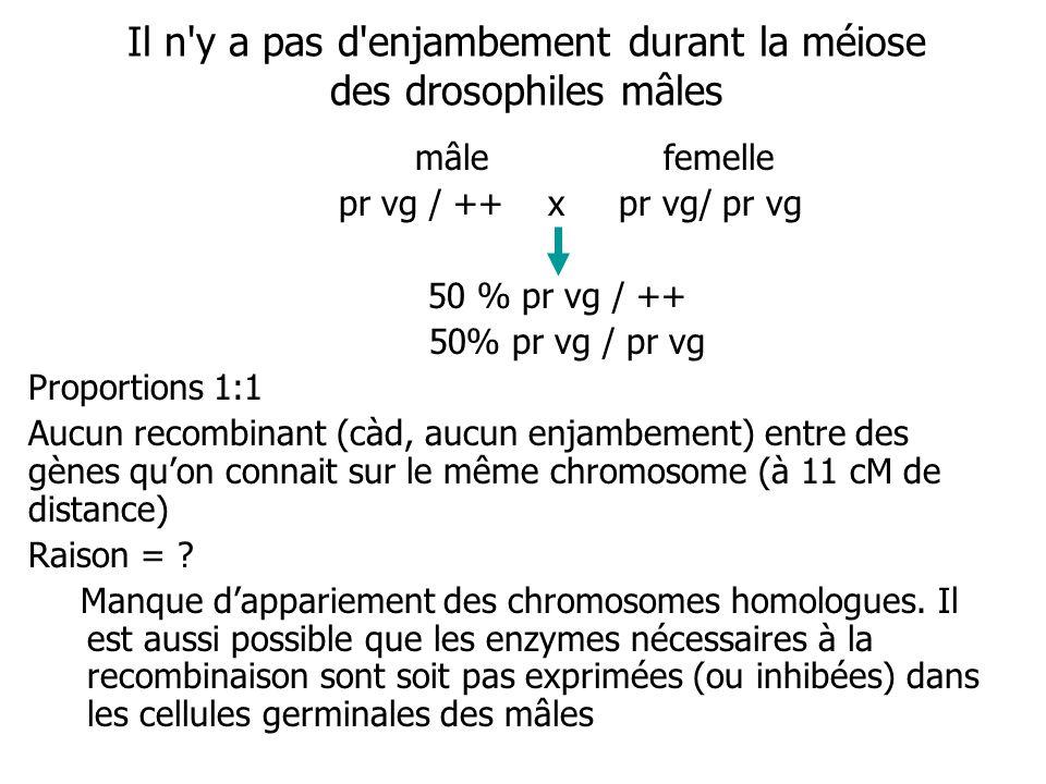 Il n'y a pas d'enjambement durant la méiose des drosophiles mâles mâle femelle pr vg / ++ x pr vg/ pr vg 50 % pr vg / ++ 50% pr vg / pr vg Proportions