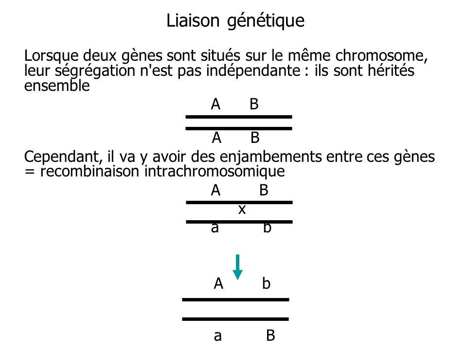 Liaison génétique Lorsque deux gènes sont situés sur le même chromosome, leur ségrégation n'est pas indépendante : ils sont hérités ensemble A B Cepen