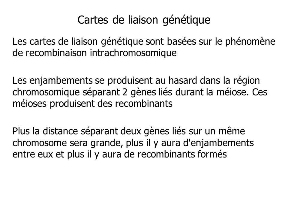 Cartes de liaison génétique Les cartes de liaison génétique sont basées sur le phénomène de recombinaison intrachromosomique Les enjambements se produ