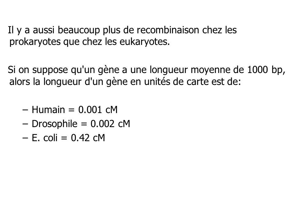 Il y a aussi beaucoup plus de recombinaison chez les prokaryotes que chez les eukaryotes. Si on suppose qu'un gène a une longueur moyenne de 1000 bp,