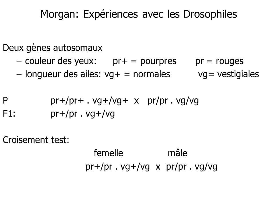 Morgan: Expériences avec les Drosophiles Deux gènes autosomaux –couleur des yeux:pr+ = pourprespr = rouges –longueur des ailes: vg+ = normales vg= ves