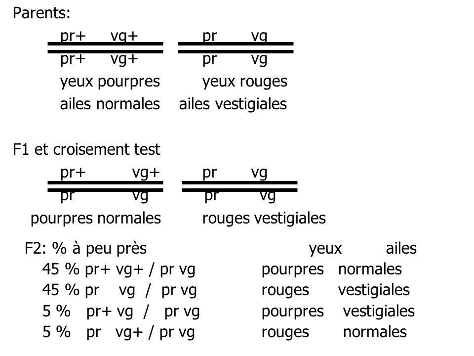 Parents: pr+ vg+pr vg yeux pourpresyeux rouges ailes normales ailes vestigiales F1 et croisement test pr+ vg+pr vg pr vg pourpres normalesrouges vesti