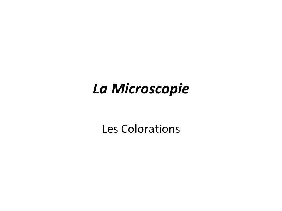 La Microscopie Les Colorations