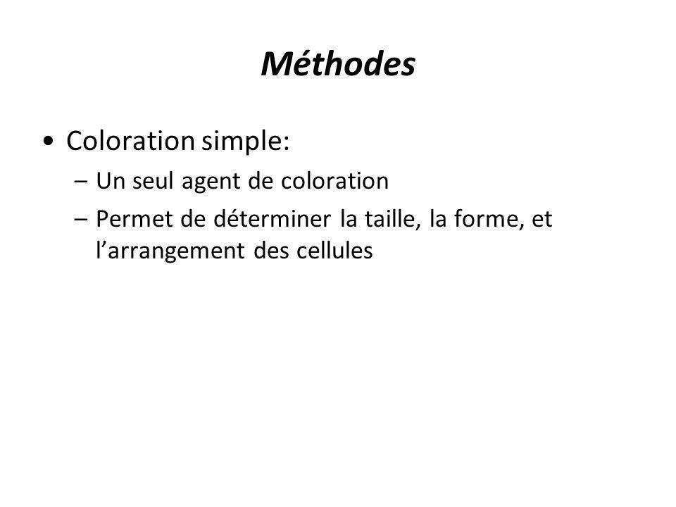 Méthodes Coloration simple: –Un seul agent de coloration –Permet de déterminer la taille, la forme, et larrangement des cellules