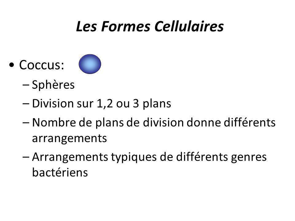 Les Formes Cellulaires Coccus: –Sphères –Division sur 1,2 ou 3 plans –Nombre de plans de division donne différents arrangements –Arrangements typiques