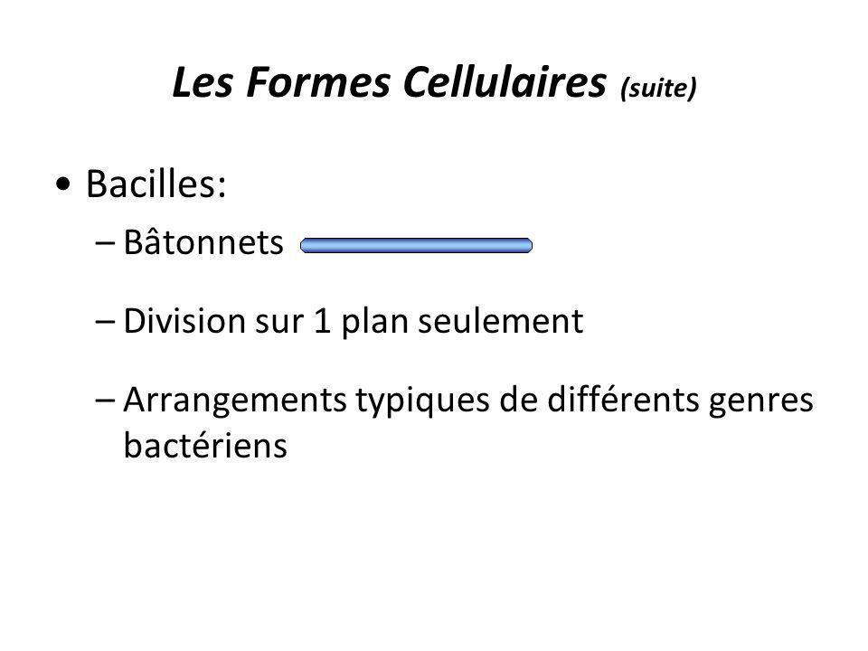 Les Formes Cellulaires (suite) Bacilles: –Bâtonnets –Division sur 1 plan seulement –Arrangements typiques de différents genres bactériens