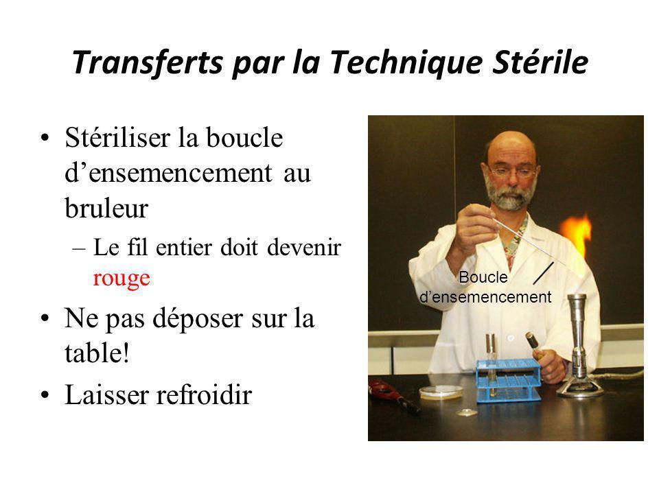 Transferts par la Technique Stérile Stériliser la boucle densemencement au bruleur –Le fil entier doit devenir rouge Ne pas déposer sur la table! Lais