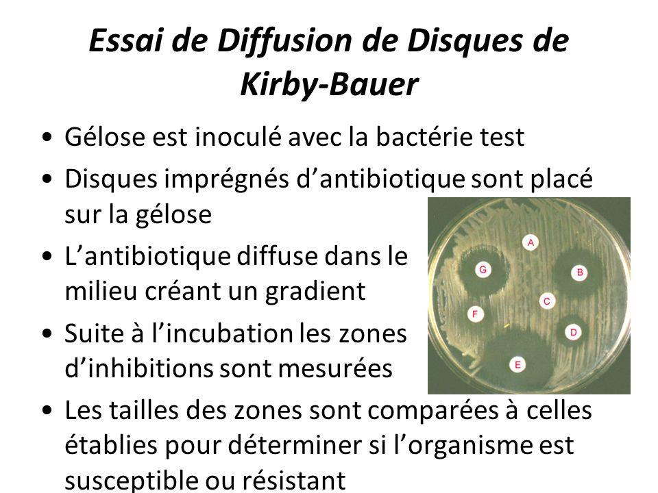 Essai de Diffusion de Disques de Kirby-Bauer Gélose est inoculé avec la bactérie test Disques imprégnés dantibiotique sont placé sur la gélose Lantibi