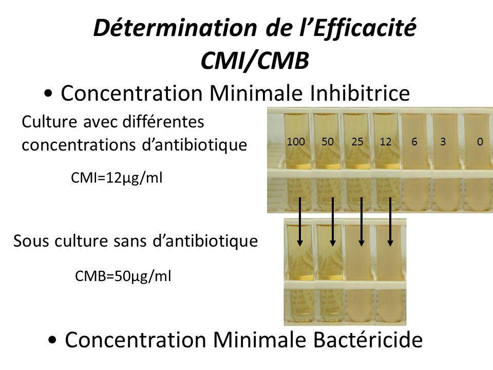 Détermination de lEfficacité CMI/CMB Concentration Minimale Inhibitrice Culture avec différentes concentrations dantibiotique 100502512630 Concentrati