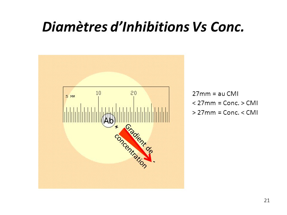 Diamètres dInhibitions Vs Conc. 21 27mm = au CMI CMI > 27mm = Conc. < CMI Gradient de concentration + -