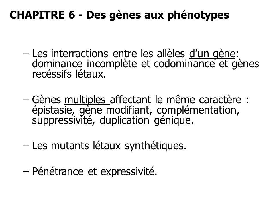 CHAPITRE 6 - Des gènes aux phénotypes –Les interractions entre les allèles dun gène: dominance incomplète et codominance et gènes recéssifs létaux. –G