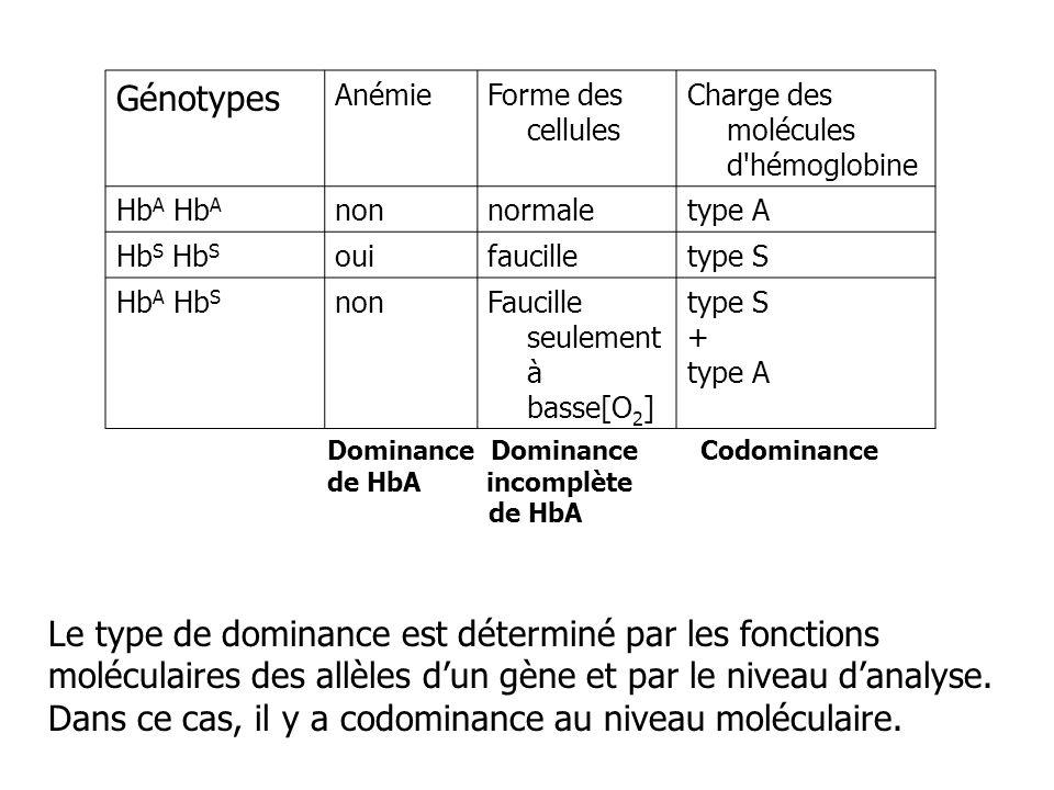 Génotypes AnémieForme des cellules Charge des molécules d'hémoglobine Hb A nonnormaletype A Hb S ouifaucilletype S Hb A Hb S nonFaucille seulement à b
