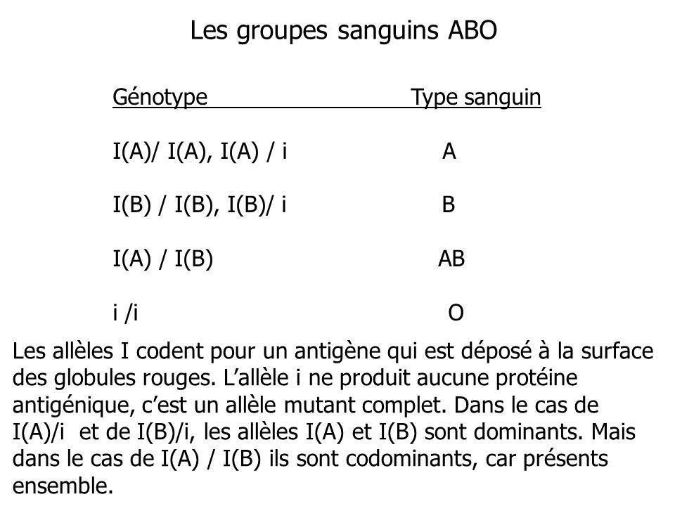 Les groupes sanguins ABO Génotype Type sanguin I(A)/ I(A), I(A) / i A I(B) / I(B), I(B)/ i B I(A) / I(B) AB i /i O Les allèles I codent pour un antigè