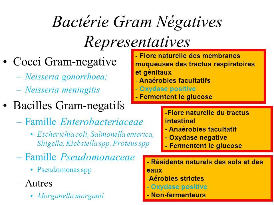 Bactérie Gram Négatives Representatives Cocci Gram-negative –Neisseria gonorrhoea; –Neisseria meningitis Bacilles Gram-negatifs –Famille Enterobacteri