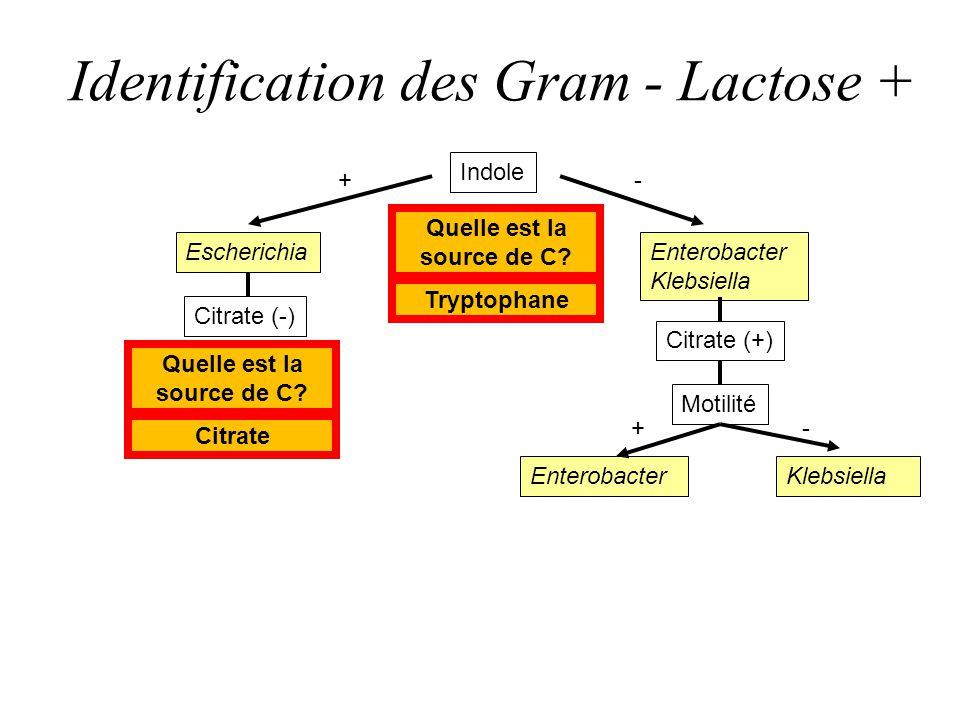 Identification des Gram - Lactose + Indole Escherichia Citrate (-) Enterobacter Klebsiella EnterobacterKlebsiella +- -+ Citrate (+) Motilité Quelle es