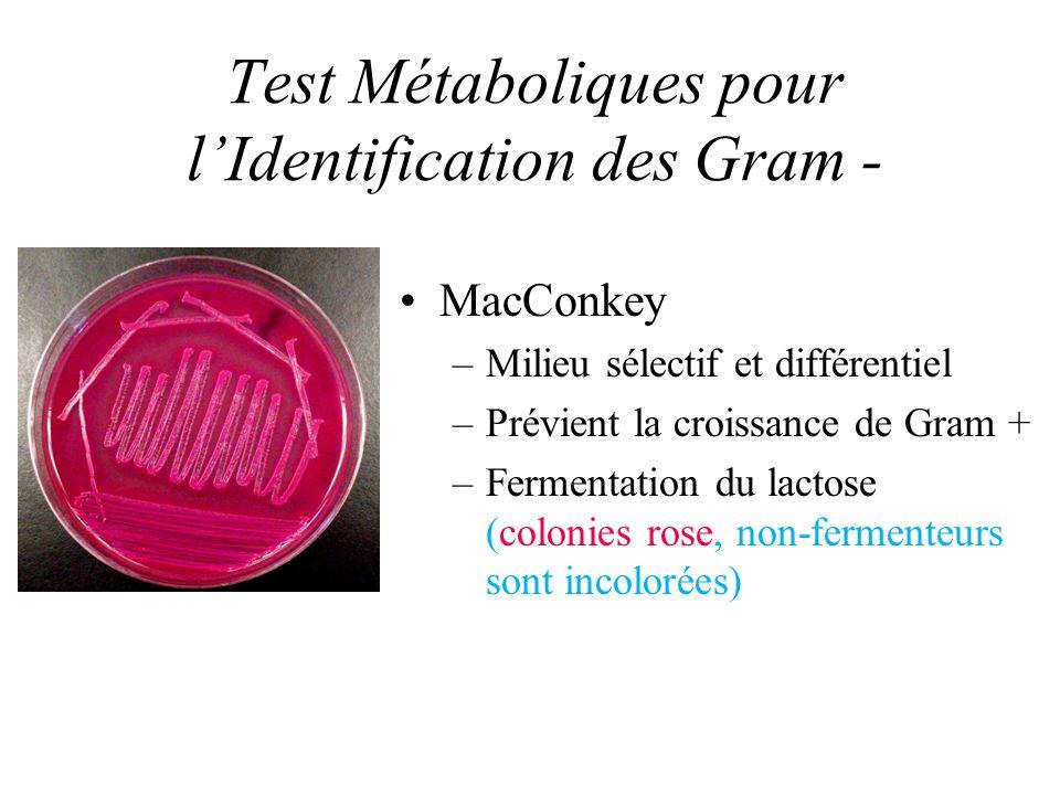 Test Métaboliques pour lIdentification des Gram - MacConkey –Milieu sélectif et différentiel –Prévient la croissance de Gram + –Fermentation du lactos