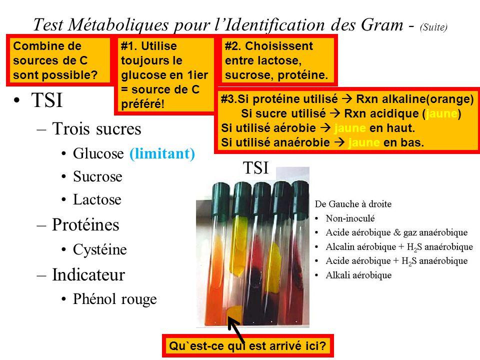 Test Métaboliques pour lIdentification des Gram - (Suite) TSI –Trois sucres Glucose (limitant) Sucrose Lactose –Protéines Cystéine –Indicateur Phénol