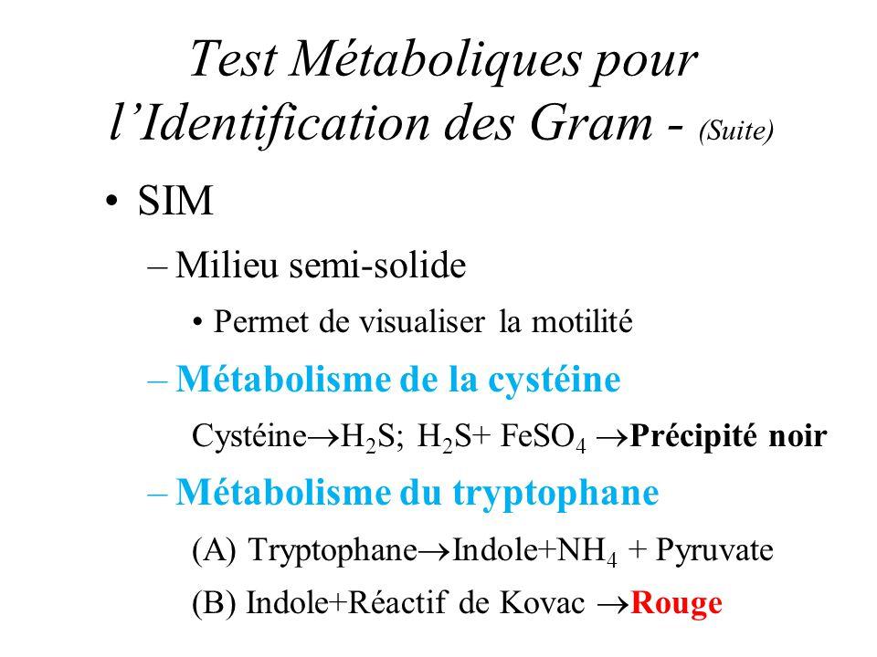 Test Métaboliques pour lIdentification des Gram - (Suite) SIM –Milieu semi-solide Permet de visualiser la motilité –Métabolisme de la cystéine Cystéin