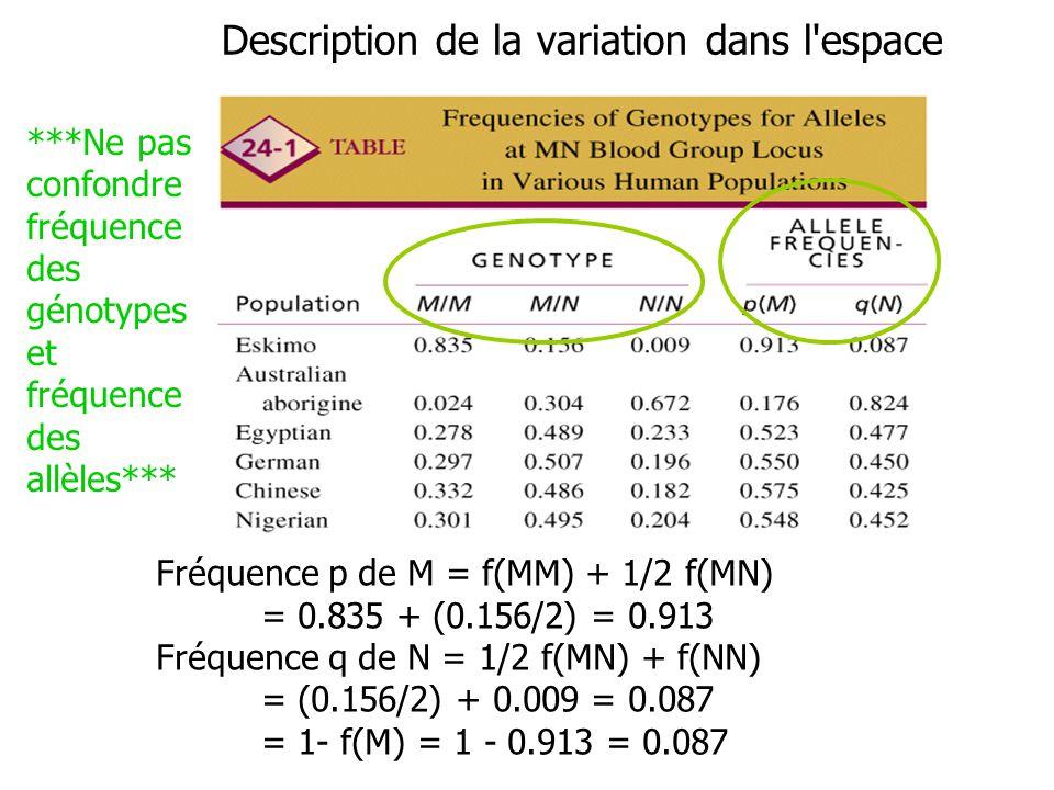 Description de la variation dans l'espace Fréquence p de M = f(MM) + 1/2 f(MN) = 0.835 + (0.156/2) = 0.913 Fréquence q de N = 1/2 f(MN) + f(NN) = (0.1