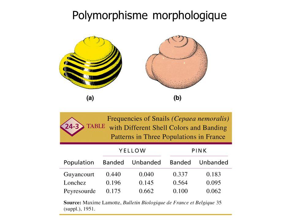 Polymorphisme morphologique