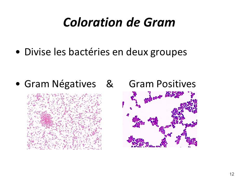 Coloration de Gram Divise les bactéries en deux groupes Gram Négatives & Gram Positives 12