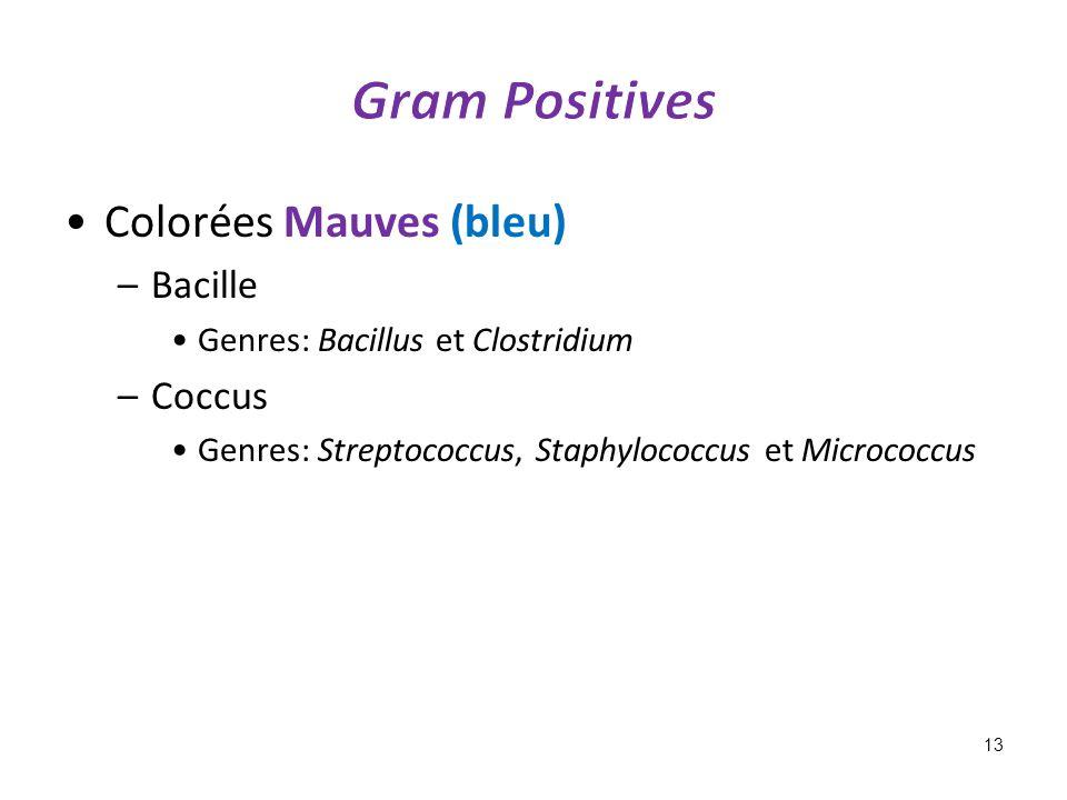 Colorées Mauves (bleu) –Bacille Genres: Bacillus et Clostridium –Coccus Genres: Streptococcus, Staphylococcus et Micrococcus 13