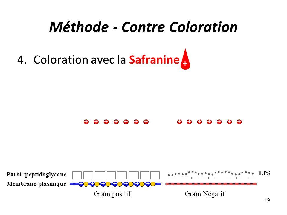 Méthode - Contre Coloration 4.Coloration avec la Safranine Gram positifGram Négatif - - - - - - - - - - - - - - - Membrane plasmique - - - - - - - - - - - - - - - Paroi :peptidoglycane LPS +++++++ + ++++++++++++++ 19