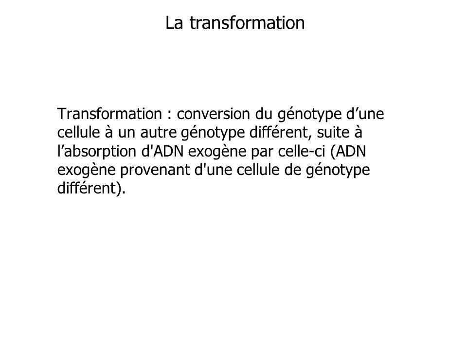 Transformation : conversion du génotype dune cellule à un autre génotype différent, suite à labsorption d'ADN exogène par celle-ci (ADN exogène proven