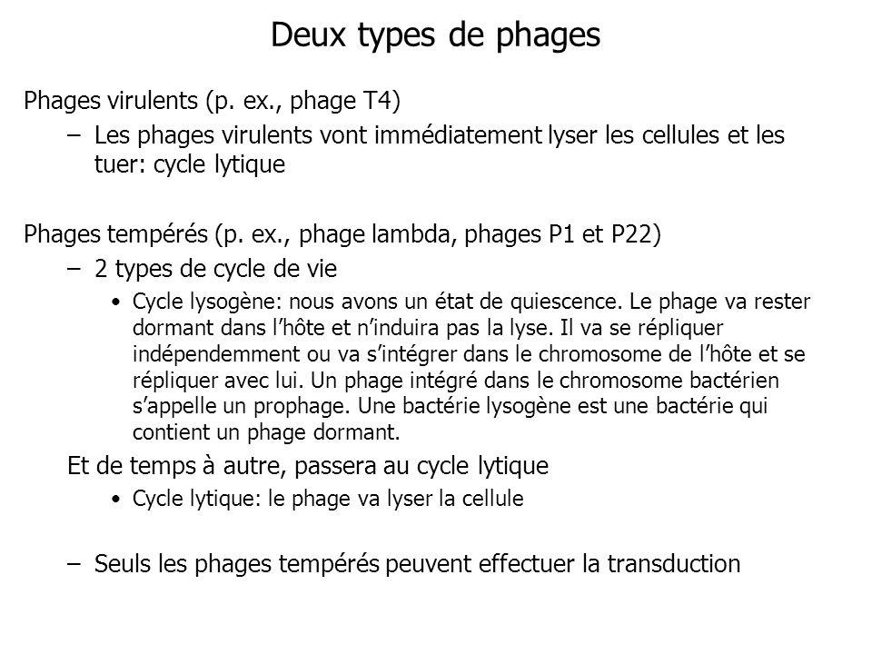 Deux types de phages Phages virulents (p. ex., phage T4) –Les phages virulents vont immédiatement lyser les cellules et les tuer: cycle lytique Phages
