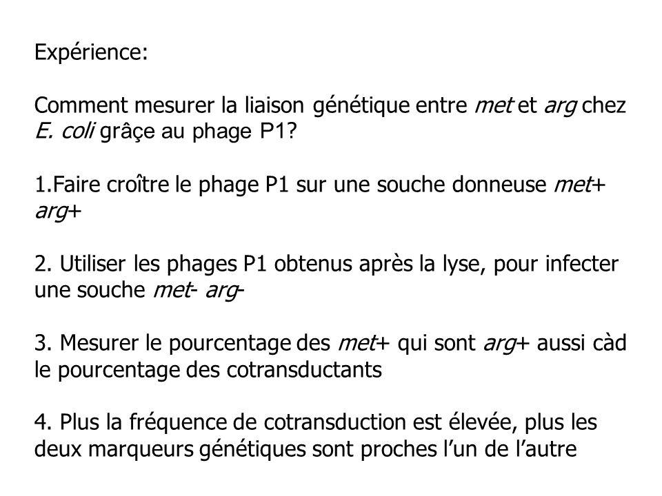 Expérience: Comment mesurer la liaison génétique entre met et arg chez E. coli gr âçe au phage P1 ? 1.Faire croître le phage P1 sur une souche donneus