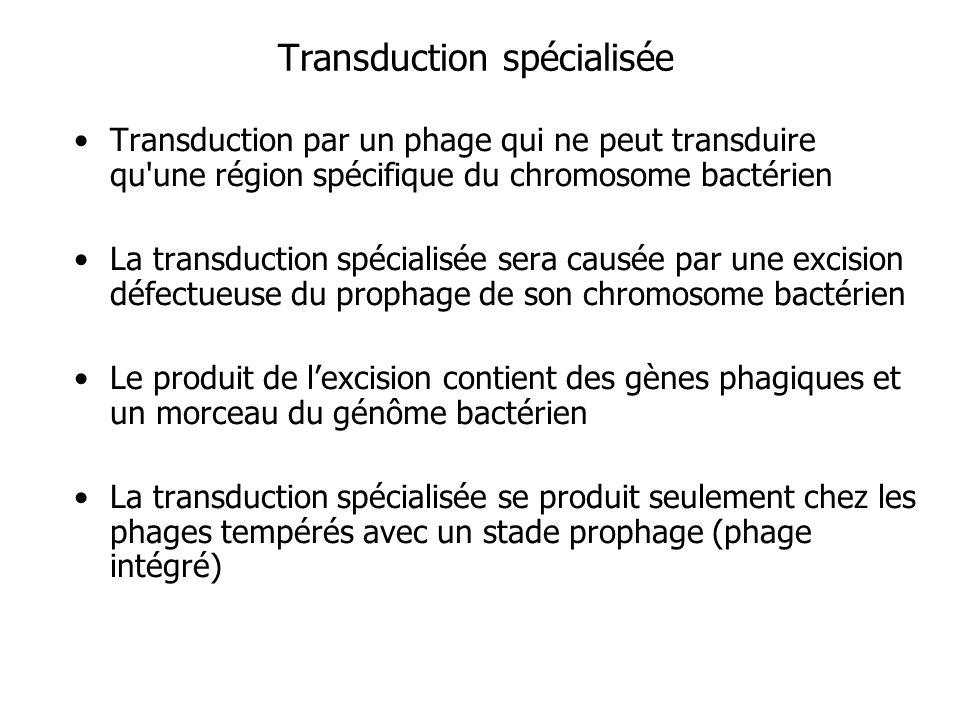 Transduction spécialisée Transduction par un phage qui ne peut transduire qu'une région spécifique du chromosome bactérien La transduction spécialisée