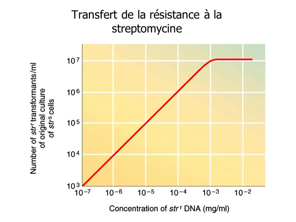 Transfert de la résistance à la streptomycine